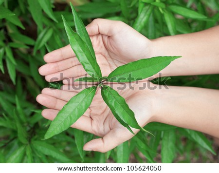 Leaf in hands over the grass