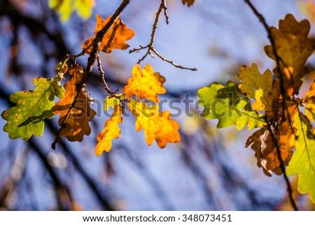 leaf in the sun #348073451