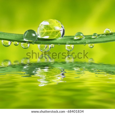 leaf in water drops