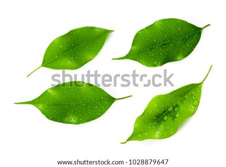 leaf isolated on white #1028879647