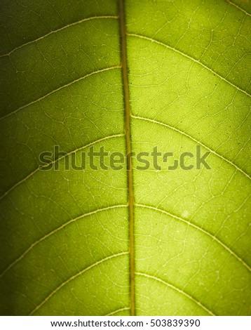leaf macro background #503839390