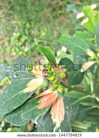 leaf, natural leaf flower tree #1447784819