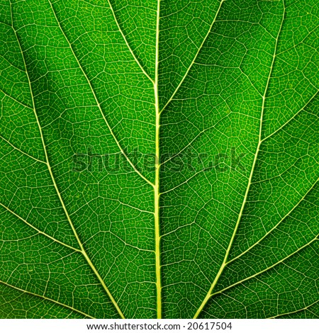 Leaf of a plant close up #20617504