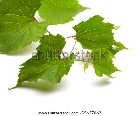Leaf of grapes isolated on white