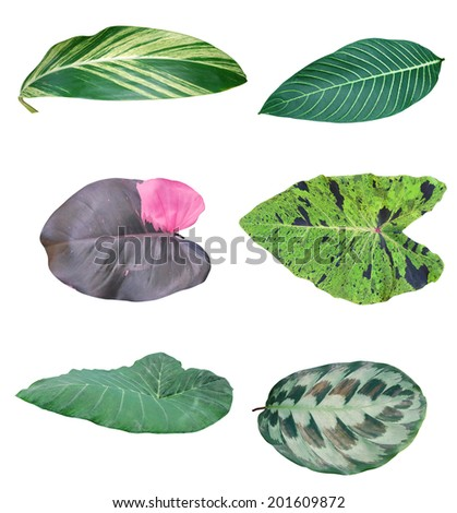 Leaf of green houseplants,  environment tree