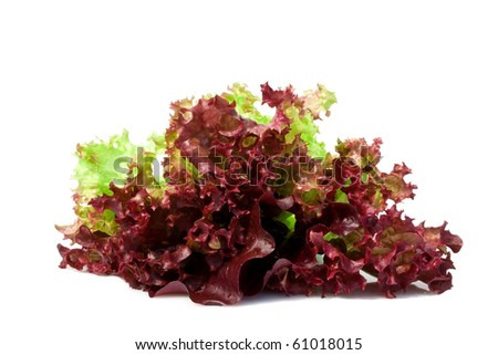 Leaf of red lettuce rich iodine isolated on the white