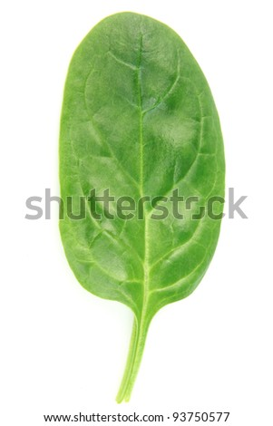 Leaf of spinach