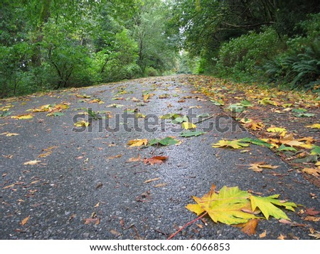 leaf on a road - stock photo