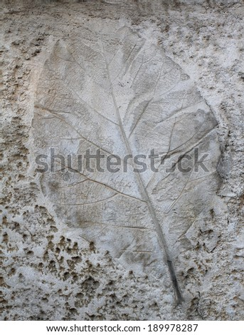 Leaf on cement texture background #189978287