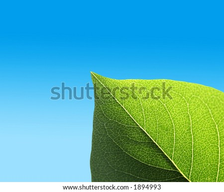 Leaf on graduated blue background