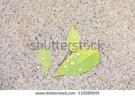 leaf on gravel floor after rain
