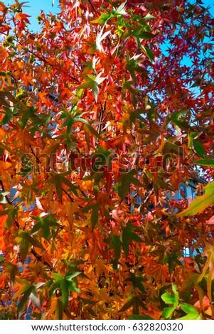 Leaf on the sky #632820320