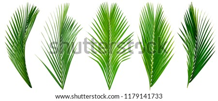 leaf palm,collection of green leaves pattern isolated on white background