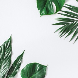 Leaf pattern. Green tropical leaves on gray background. Summer concept. Flat lay, top view, copy space, square