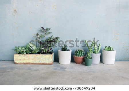 Leaf plant and cactus in pot on concrete floor #738649234