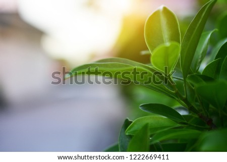 leaf Plant part Green color Plant Growth close-up Nature no people selective focus beauty in Nature outdoors day focus on foreground #1222669411