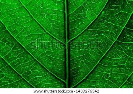 Leaf ribs and veins ,Leaf Vein, Close-up, Leaf, Plant, Built Structure #1439276342