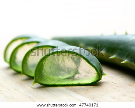Leaf's cross section of a cactus known as Aloe vera, which is used in herbal medicine ad cosmetics.