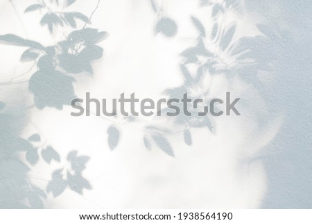 Leaf shadow and light on wall blur background. Nature tropical leaves tree branch shade with sunlight on white wall texture for background wallpaper and design