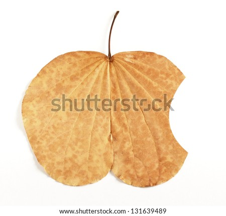 Leaf similar apple