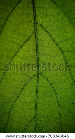 Leaf texture background #708343045