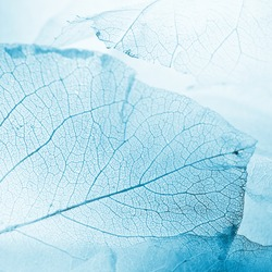 leaf texture in blue winter style