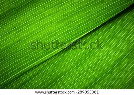 Leaf Texture./ Leaf Texture.