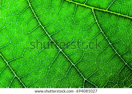 leaf texture macro close-up, leaf texture for pattern and background. #694081027