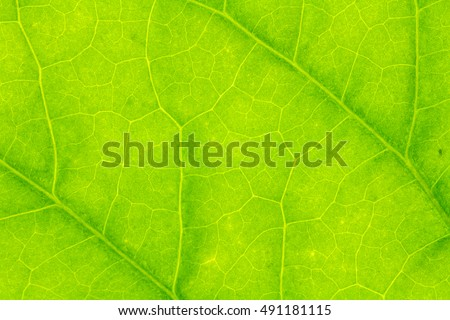 Leaf texture or leaf background for design with copy space for text or image. Abstract green leaf texture. leaf.leaf.leaf.leaf.leaf.leaf.leaf.leaf.leaf.leaf.leaf.leaf.leaf.leaf.leaf.leaf.leaf.leaf.