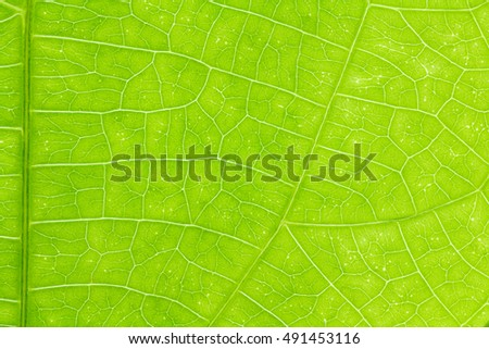 Leaf texture or leaf background for design with copy space for text or image. Abstract green leaf texture.leaf.leaf.leaf.leaf.leaf.leaf.leaf.leaf.leaf.leaf.leaf.leaf.leaf.leaf.leaf.leaf.leaf.leaf.leaf