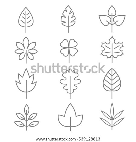 Leaf thin line icons. Linear leaves oak and maple illustration