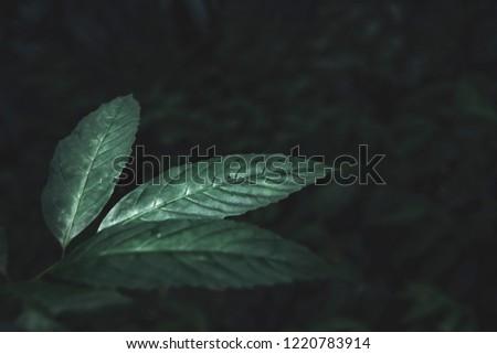 Leaf to background. Dark blue tone. retro tone. #1220783914
