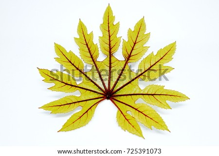 leaf vector #725391073