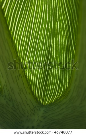 leafvenation
