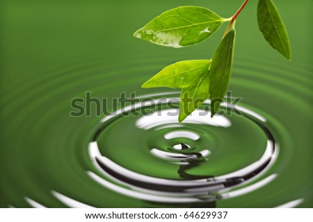 Leaf with drop of rain water causing ripple with green background