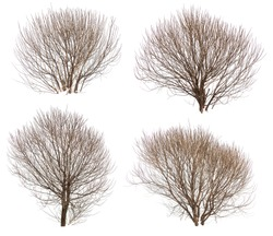Leafless bushes in winter isolated on white background