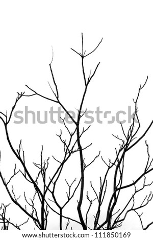 Leafless tree branches abstract background. Black and white.
