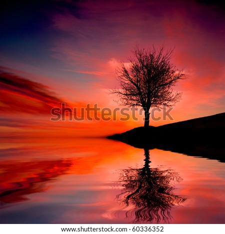 Leafless tree near lake on sunset background sky - stock photo
