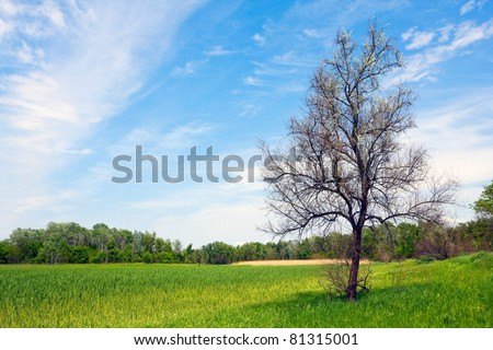 Leafless tree on green meadow