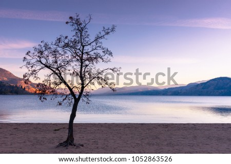 Leafless tree silhouetted against sunset sky, mountains, lake, and beach in autumn