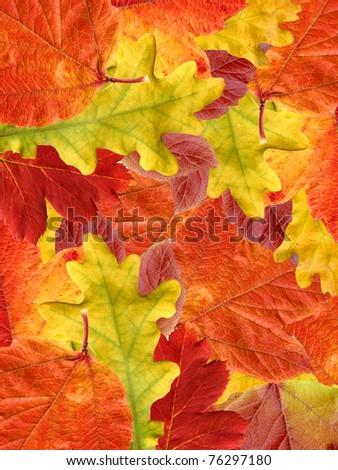 Leafs autumn.