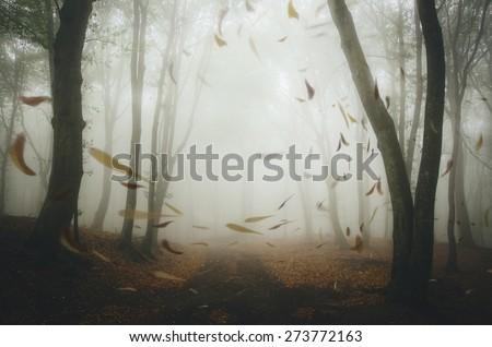 leafs blown by wind in misty forest