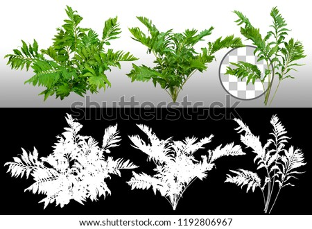 Leafs of fern plant isolated on a transparent background via an alpha channel of great precision. Bush of lush green leaves. High quality mask  for professional composition. #1192806967