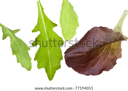 leafs of rocketsalad isolated on white