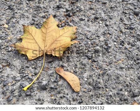 leafs on gravel #1207894132