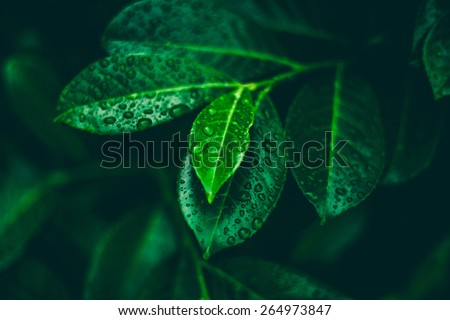 Stock Photo Leafs with dew