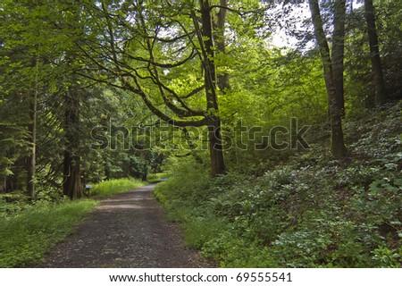 Leafy lane, country-path, shot in Cavan, Ireland.