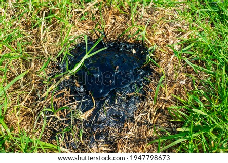 Leaking tar pit, a black, gooey mess, is seeping from the ground over green grass in La Brea Tar Pits Stok fotoğraf ©