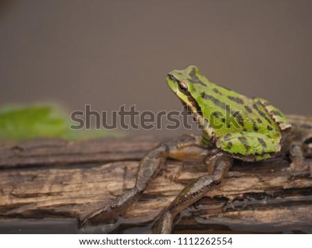 leap frog leap #1112262554