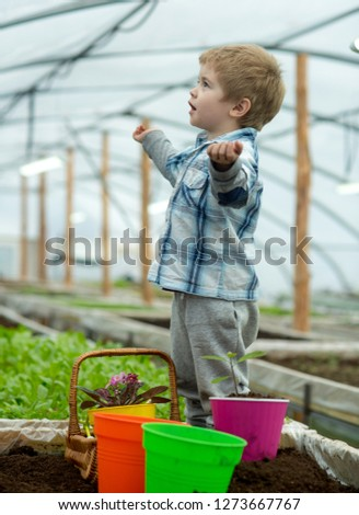 learning ecology. small boy learning ecology in greenhouse. learning ecology while working with plants. learning ecology for little gardener. #1273667767